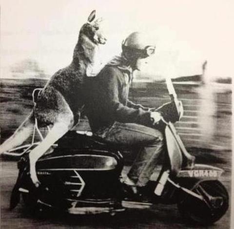 Kangeroo on a Lambretta